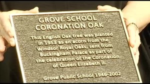 Plaque in Peterborough commemorates planting of Royal English Oak Coronation Tree