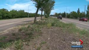 Is Edmonton doing enough to maintain city landscaping?