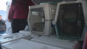 Seal pups released by Vancouver Aquarium rescue centre
