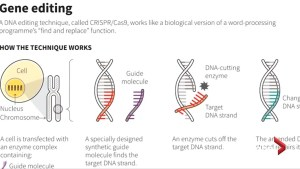 China orders halt to gene-editing after outcry over babies