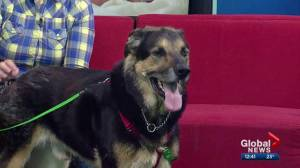 Calgary Humane Society Pet of the Week: Moe
