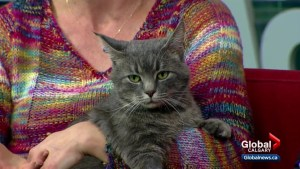 Calgary Animal Services Pet of the Week: Guinness