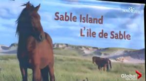 Sable Island Conference