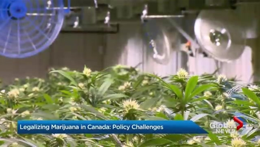Canada becomes second country to legalize marijuana nationwide