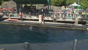 Vancouver Aquarium drops lawsuit with Park Board (01:57)