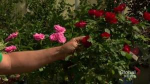 Garden Tips: June planting