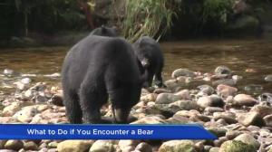 What to do if you encounter a bear in the wild