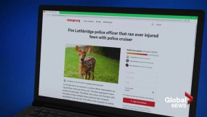 Public reacts to video of Lethbridge police officer driving over injured deer