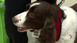 U of S study finds therapy dogs improve hospital patient experience