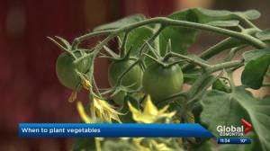 When should you plant your vegetables in the Edmonton area?