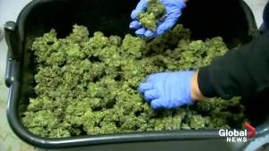 Israel's cabinet expected to approve medical cannabis exports
