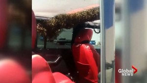 Bees take over man's jeep in California