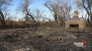Family loses 4 dogs in Wheatland County wildfire