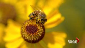 Climate change affecting bee population