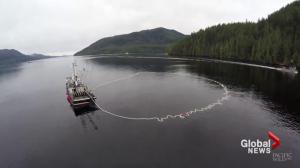 Global fisheries declining at alarming rate