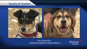 Global Peterborough's Shelter Pet Project – Sparky and Tracker