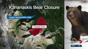 Skiers encounter grizzly in Kananaskis Country — what you should know about winter bear sightings