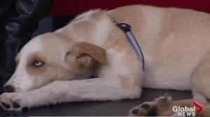 Adopt a Pet: Lucas looking for his new home