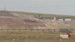 Calgary woman find dead horses at Calgary landfill