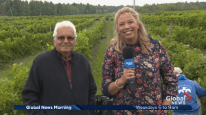Quebec's Wine Route: Gagliano Vineyards