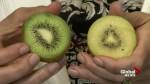 Nutrition: Kiwis