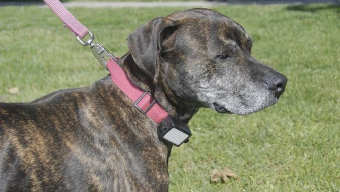 eaf49f7beb » BC SPCA launches campaign to eliminate use of shock collars on dogs –  Global NewsThe Doggy Blogger
