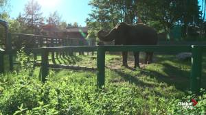 The Edmonton Valley Zoo gets ready for ZooFest 2019