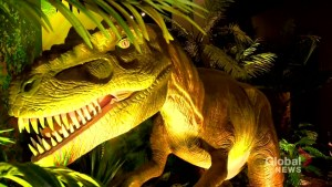 Halifax museum hosts Dinosaurs Unearthed