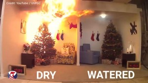 Dry Christmas tree vs. well-watered Christmas tree