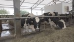 Vancouver Island dairy offers 'milk on tap'