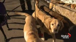 Dog walker responds to allegations she left 7 dogs in her car during extreme cold alert