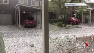 Video shows hail damaging trees in Calgary