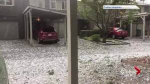 Video shows hail damaging trees in Calgary (00:59)