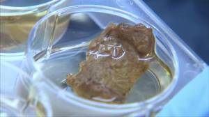 Where's the beef? Israeli company developing lab-grown steak
