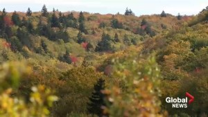 Nature Conservancy of Canada names new reserve in Nova Scotia