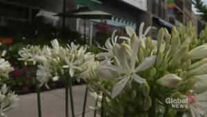 City councillor pushing for more pop-up shops along Danforth