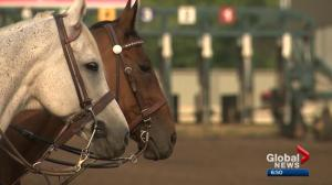 Horse racing fans lament what could be last Canadian Derby at Northlands