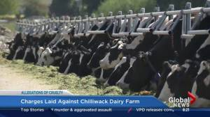 BC Dairy Association on industry changes after Chilliwack investigation