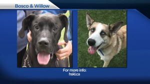 Shelter Pet Project – Bosco and Willow