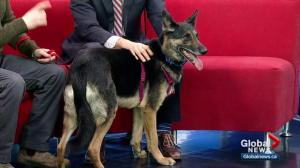 Pet of the Week: Jake