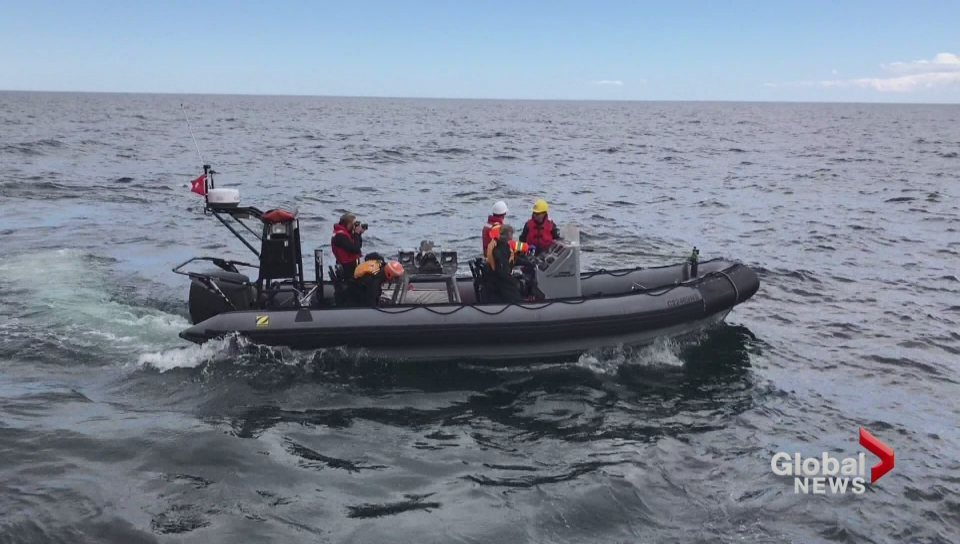 Another dead North Atlantic right whale found off NB coast: DFO