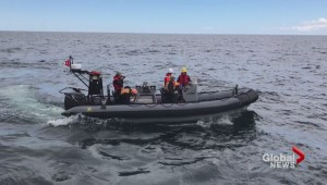 Two more North Atlantic right whales found dead off coast of Newfoundland