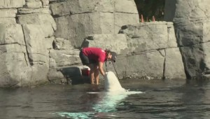 Protestors demonstrate against Vancouver Aquarium lawsuit