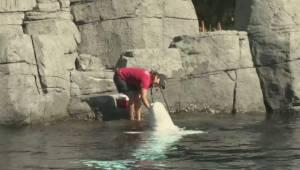 Protestors demonstrate against Vancouver Aquarium lawsuit