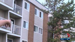 3-year-old falls from Edmonton apartment window