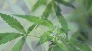 Doctors flag marijuana concerns on eve of legalization