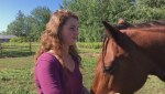 New Brunswick family gets high profile support from former MP in fight to keep horses