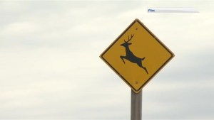 Watch for Wildlife launches in New Brunswick