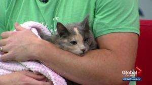 Pet of the Week: Delilah
