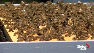 Man stung to death by swarm of bees after trying to remove hive from
